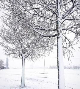 Freddo raggiunge il Nord: Neve fino in spiaggia tra Veneto e Emilia [FOTO] -Torre di Mosto, Veneto