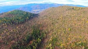 Foreste di alberi rase al suolo dai forti venti nei giorni scorsi